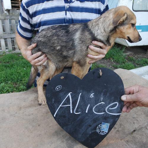alice_2016-06-26_02