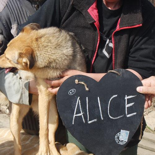alice_2017-01-22_01