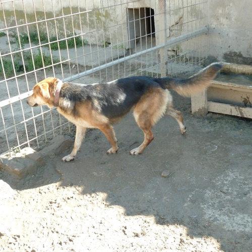 aranka_2014-08-15_12