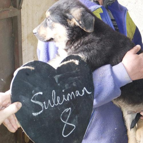 suleiman_2016-10-15_01