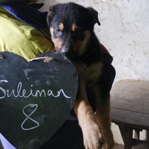 suleiman_2016-10-15_02