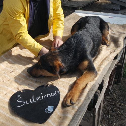 suleiman_2017-01-22_01