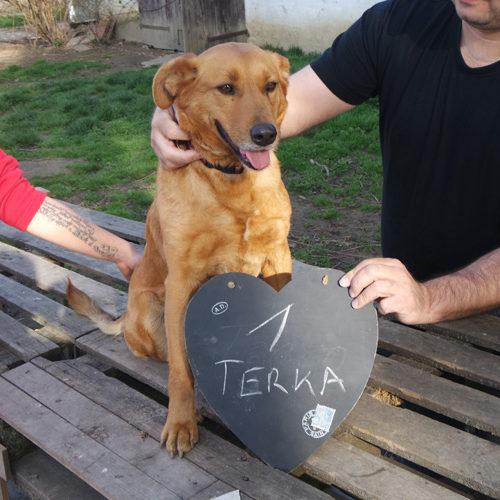 terka_2017-01-22_01