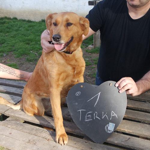 terka_2017-01-22_02