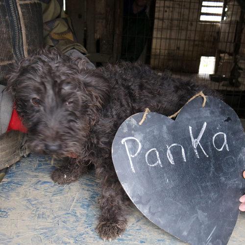 panka_2017-11-27_01