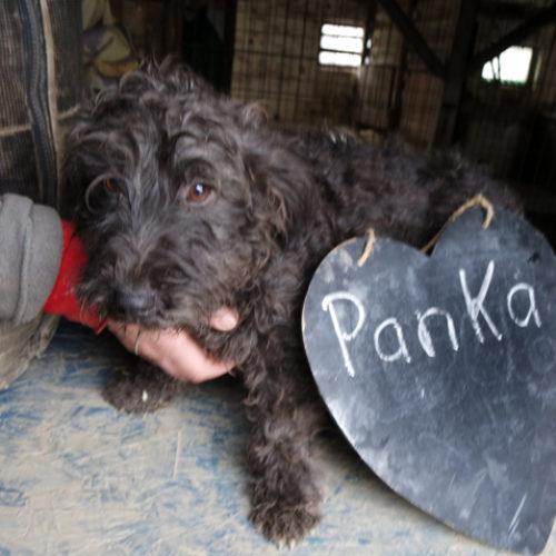 panka_2017-11-27_04