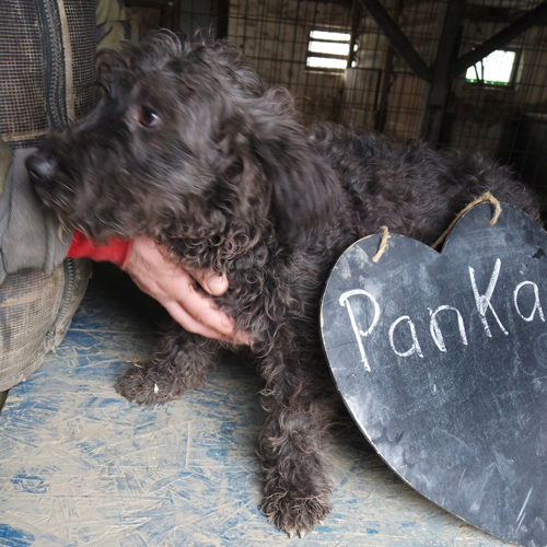 panka_2017-11-27_05