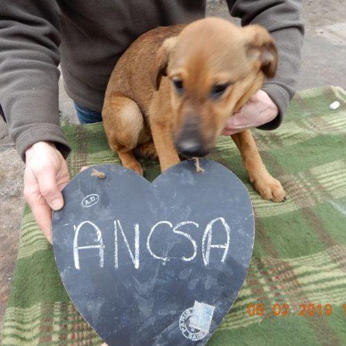 ancsa_2019-02-08_01