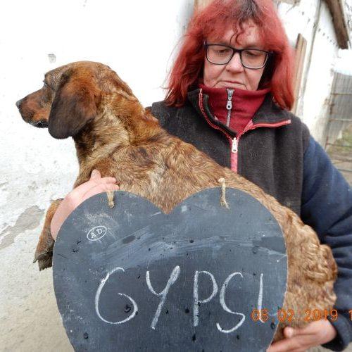 gypsi_2019-02-08_02