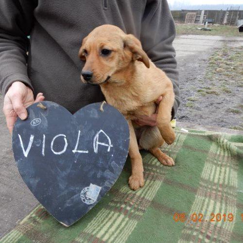 viola_2019-02-08_01