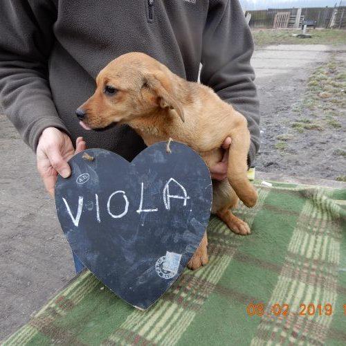 viola_2019-02-08_02