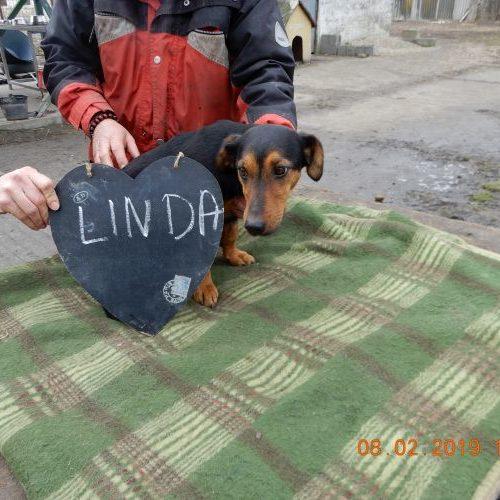 linda_2019-02-08_01