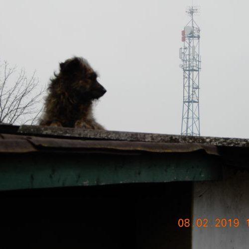 bucsi_2019-02-08_01
