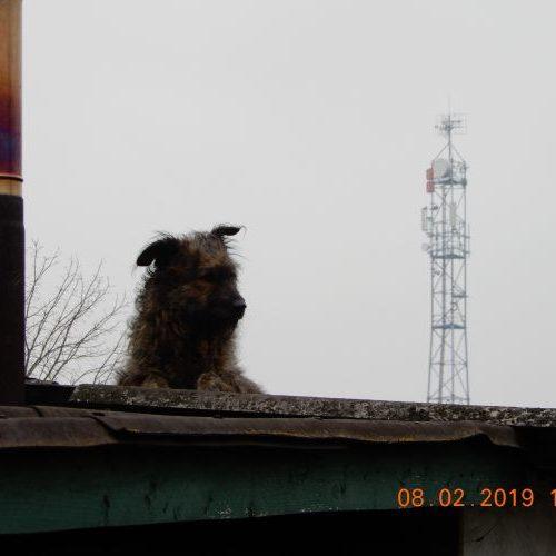 bucsi_2019-02-08_02