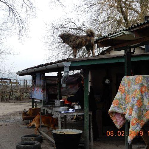 bucsi_2019-02-08_13