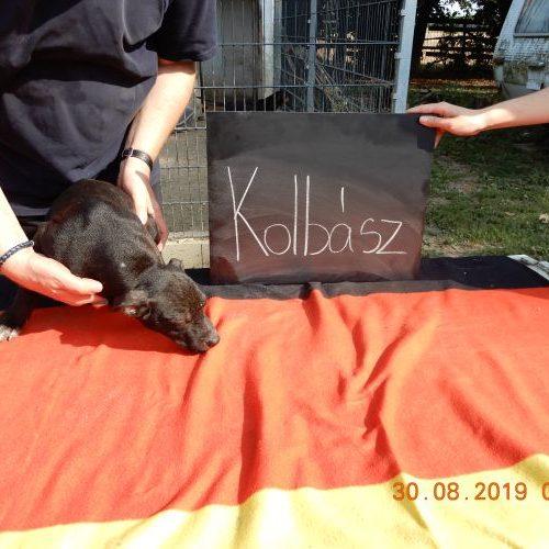 kolbasz_2019-08-30_02