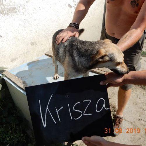 krisza_2019-08-31_01