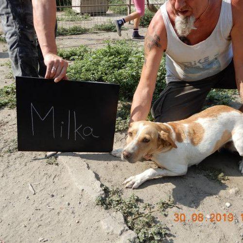 milka_2019-08-30_01