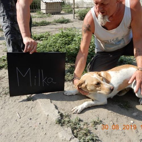 milka_2019-08-30_02