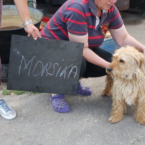 morsika_2020-04-25_19