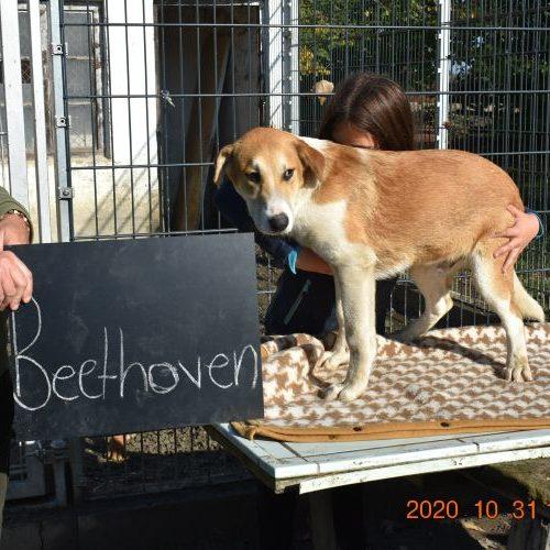 beethoven_2020-10-31_09