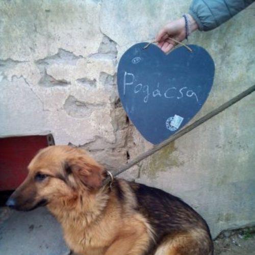pogacsa_2021-05-02_03