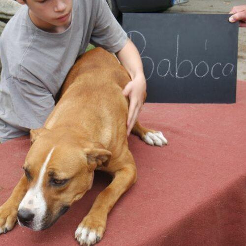 baboca_2021-08-10_09